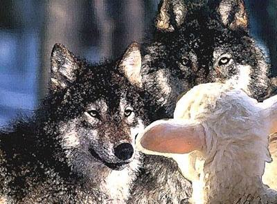 wolf-in-sheeps-clothes